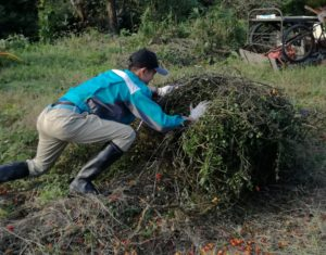 トマトの木の回収