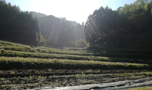 枚方市穂谷の里山