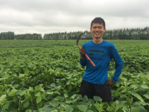 北海道のオーガニック大豆畑