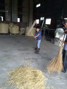 スペルト小麦の種取