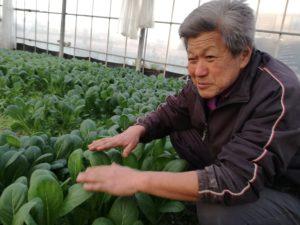福田さんの小松菜