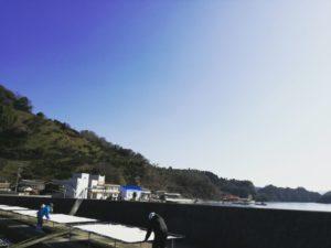 切り干し大根作り@愛媛県/西予市/明浜町/無茶茶園