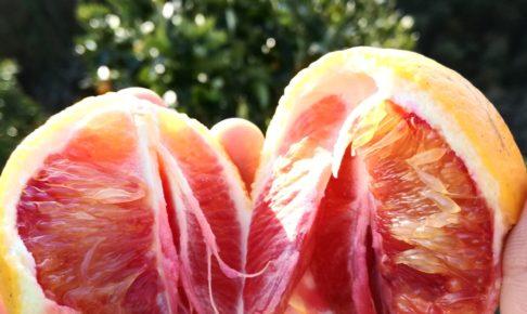 無農薬ブラッドオレンジ