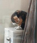 ベランダで普通にくつろぐ野良猫