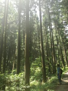 お気に入りの森@小川町