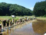 60人での田植え(手植え)@ぶくぶく農園