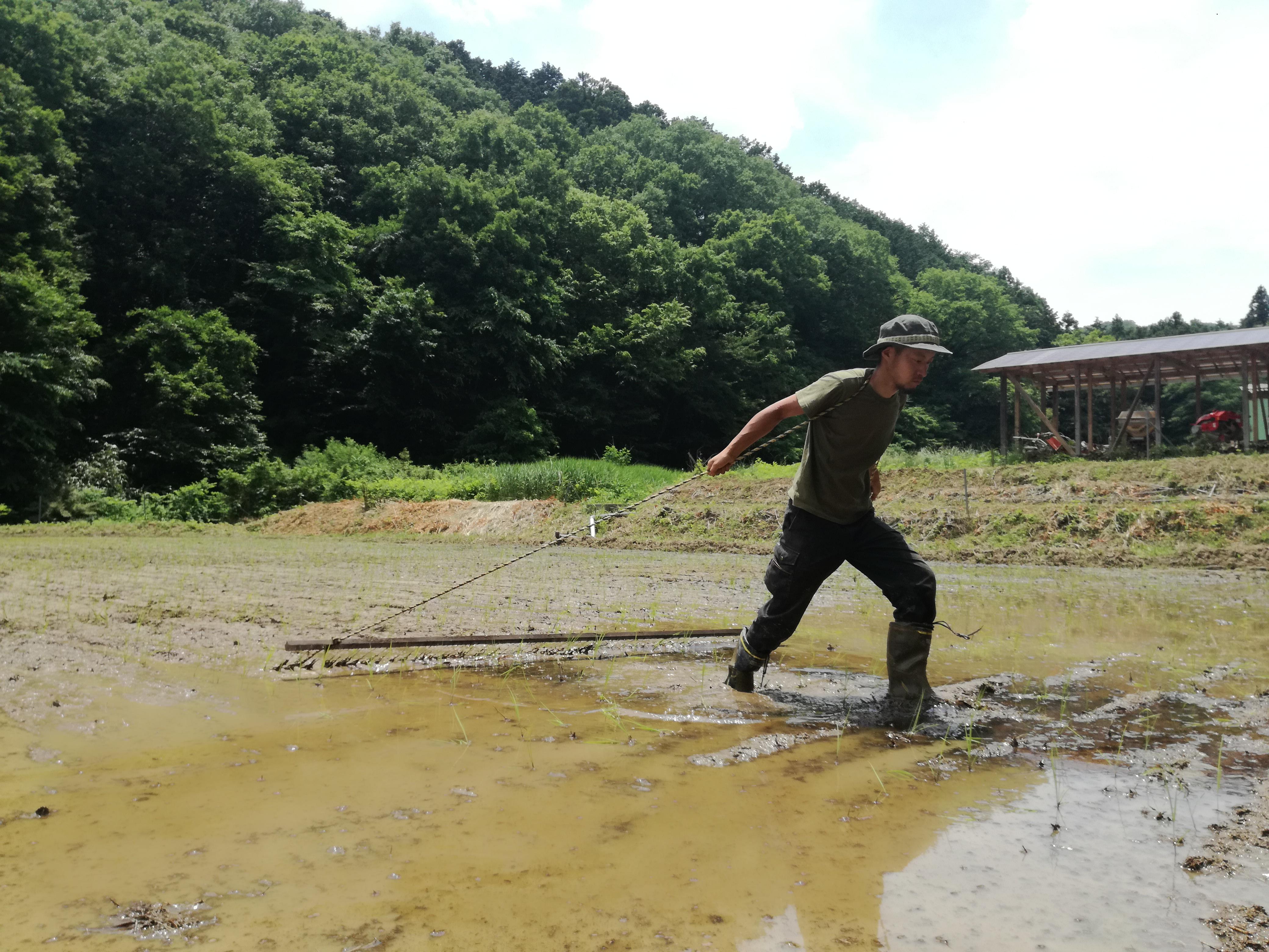 タイヤ引きトレーニングを思い出す田んぼの除草作業