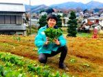 元耕作放棄地の畑でもタネをまいたらできた野菜、小松菜