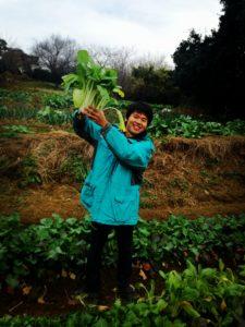 元耕作放棄地の畑でもタネをまいたらできた野菜、しゃくし菜