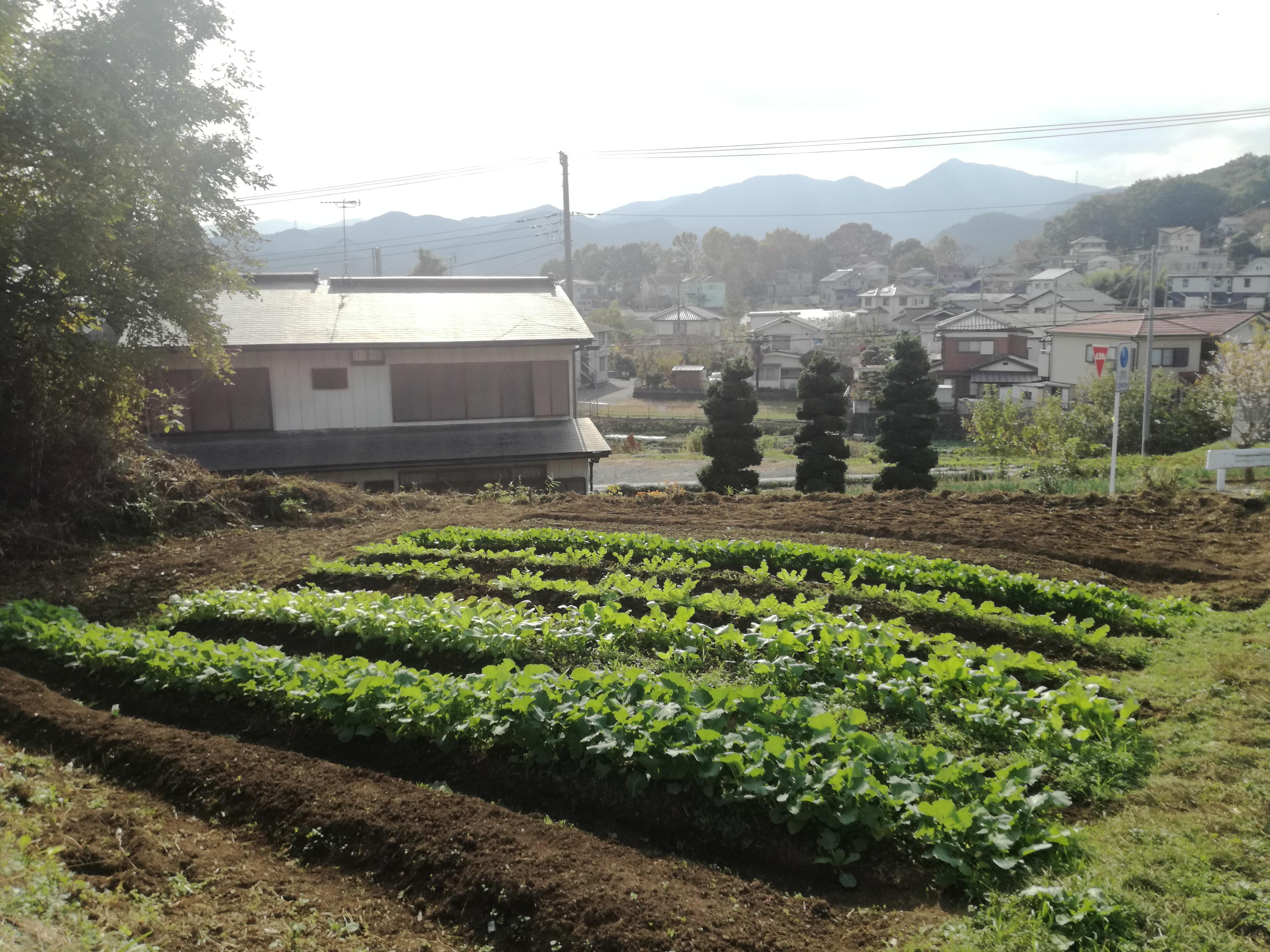 また少し開拓した耕作放棄地の畑