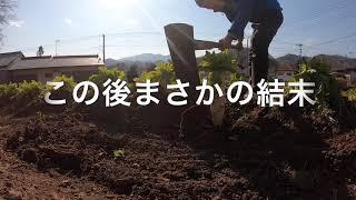 クワでの大根の収穫を試みた結果をYoutubeにアップしてみたクワでの大根の収穫を試みた結果をYoutubeにアップしてみた