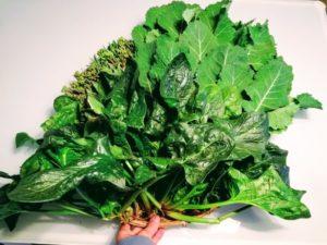 のらぼう菜とのらぼう菜の菜の花とほうれん草