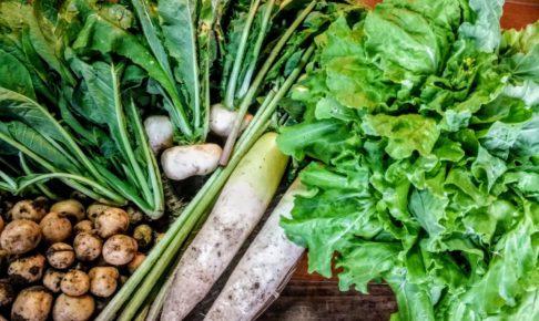 最近畑で取れた春野菜